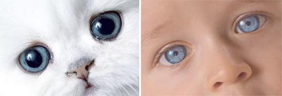 Сравнение котят с детьми