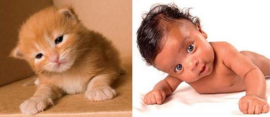Сравнение котят с детьми (Конкурс)