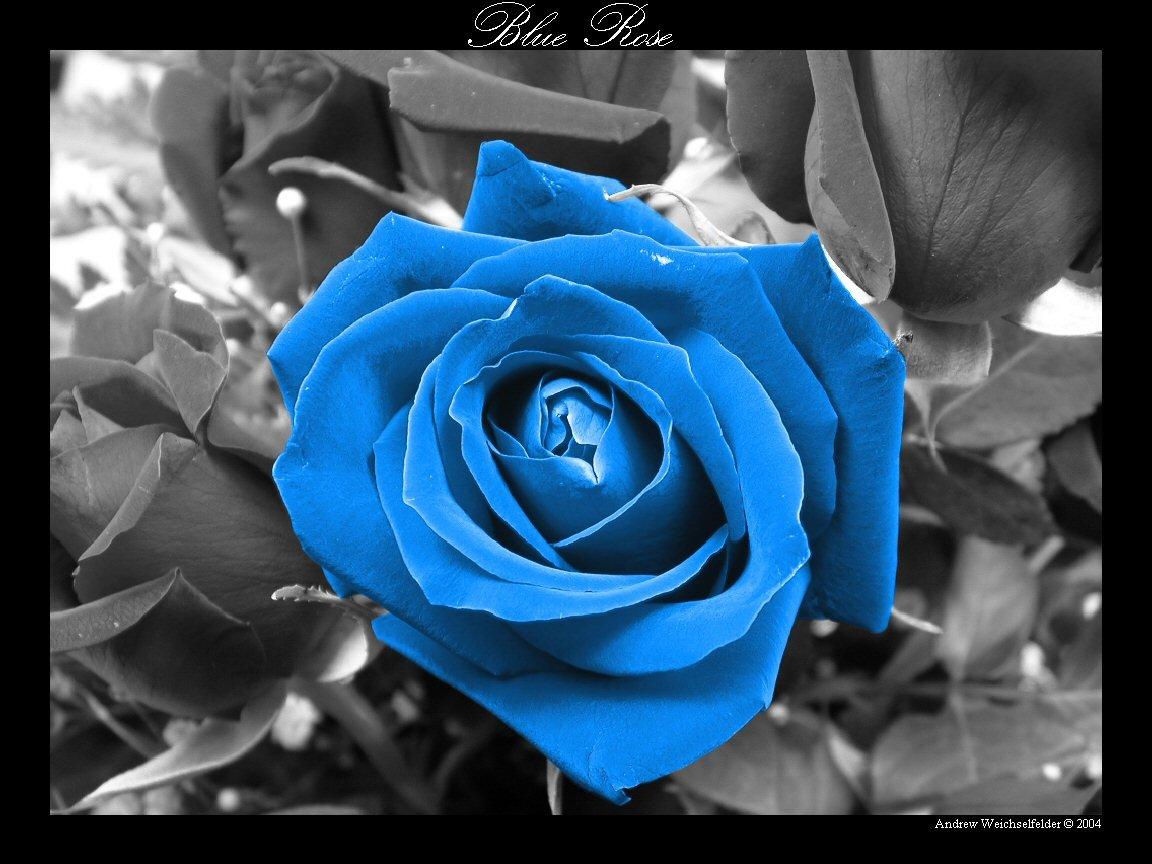 Япония станет первой страной мира, где в продажу поступят натуральные синие...